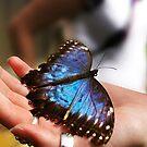 Vibrant Blue Butterfly Sitting On The Palm Of A Girls Hand by Joel Kempson