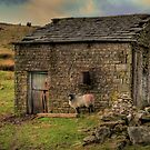 Home Sweet Home by Andy Harris