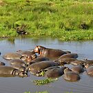 Hippos by caymanlogic