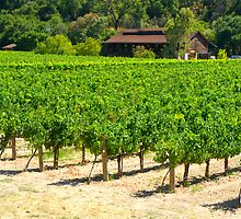 Napa Valley Vineyard by Karin  Hildebrand Lau
