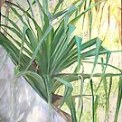 Pandanus Palm by gunnelau