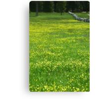 Field of Buttercups Canvas Print