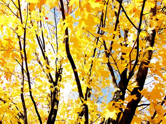 fall trees by brian gregory