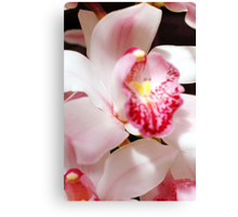 One Lacy Orchid Canvas Print
