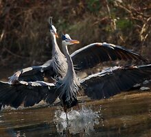 River Dance by Kenneth Haley