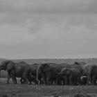Elephants (Loxodonta) by Deborah V Townsend