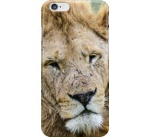 Taking care of Scarface (Panthera leo) iPhone Case/Skin