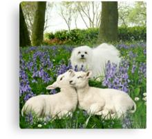 Snowdrop the Maltese & the Spring Lambs. Metal Print