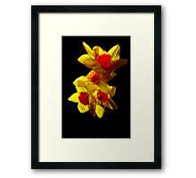 Abstract Daffodils Framed Print
