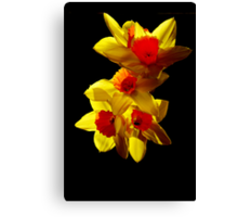 Abstract Daffodils Canvas Print