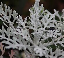 Silvery plant on a winters day by Wildruth