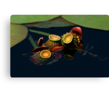 Lily Buds Canvas Print
