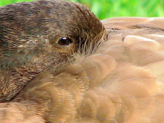 Duck Down by Lynda Kerr