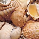 Shells on Tropical Beach by Henry Beeker