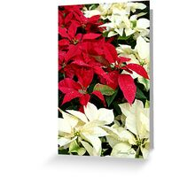 Poinsettias Sprinkled with Raindrops Greeting Card