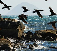 Arran Flight by Richard Ion