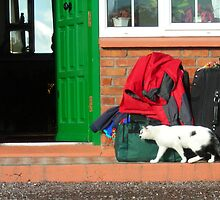 Who Brought the Cat? by Cathy Klima