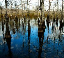"""REFLECTIONS AT BIG CYPRESS"" by David Lee Thompson"