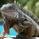 Iguana by Yaroslav  Williams