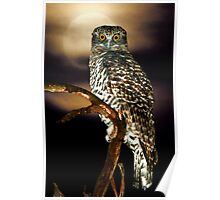 Powerful Owl Poster