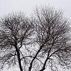 Tree Silhouette by JonHanson