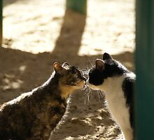 2 Cats Kissing by Moshe Cohen