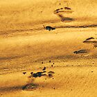 Footsteps on Cable Beach by robotsdream