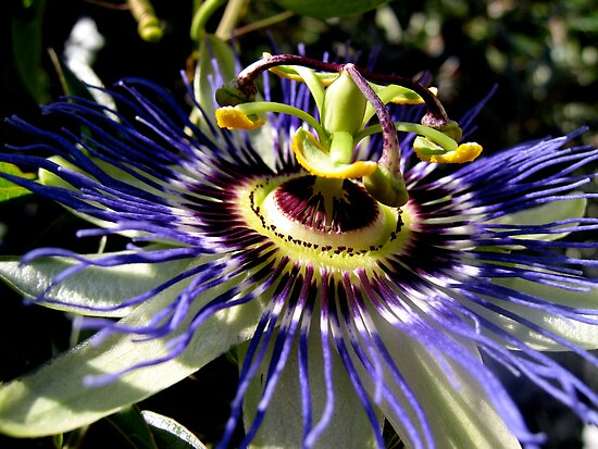 Passion Flower by Robin Fortin IPA