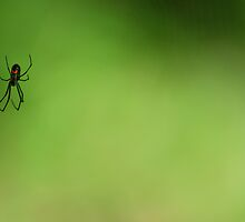 Spider by Ad Nasar