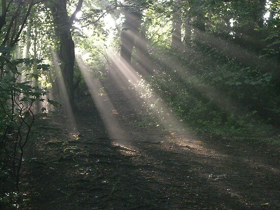 Sunlight 2, Kearsney Abbey woods by FelicityB