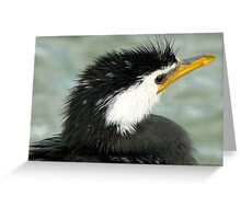 Who Said Eel? - Pied Cormorant - NZ Greeting Card
