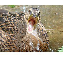 Hey Look!!! I Can Catch Water... Mallard Duckling - NZ Photographic Print