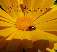 You're Appreciated - Ladybird - NZ by AndreaEL
