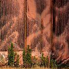 Orange Poles by Chris Allen
