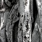 Curtain Fig Tree Formation Detail by DanikaL