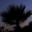 Palm At Night With Lights by Michael Redbourn