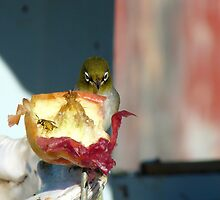 Aww..Wee!!! Your'e An Unwelcome Guest On My Apple! - Silver-Eye - NZ by AndreaEL