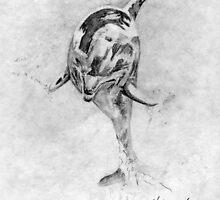 Dolphin by Hoffard