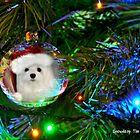 Snowdrop the Maltese - Oh, Christmas Tree by Morag Bates
