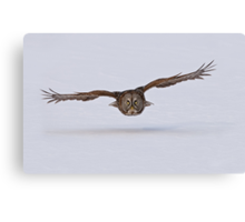 Great Gray Owl in Flight - Ottawa, Ontario Canvas Print