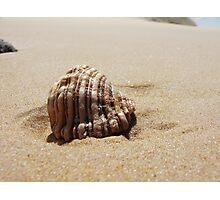 Croajingolong National Park - Shell Photographic Print
