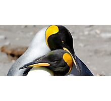 King Penguin couple Photographic Print