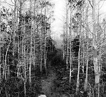 Florida Trail, in Big Cypress. by David Lee Thompson