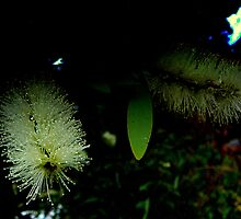 FIBRE OPTIC BOTTLE BRUSH by Ekascam