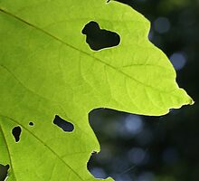 Feed For The Tiny Forest Creatures - The Holey Leaf by Shawnna Taylor