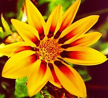 Sunkissed Yellow And Red Ganzia by Shawnna Taylor