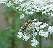 Wasp Among The Flowers by Shawnna Taylor