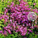 Garden Somewhere! by Nancy Richard