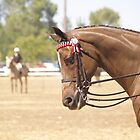 Dressage Horse at the Allora Show by flash62au