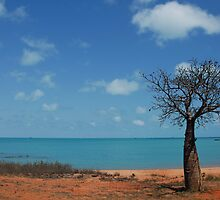 Broome Boab  by robotsdream